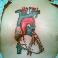 Organiskt hjärta
